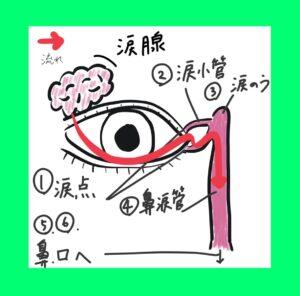 図1 点眼薬の流れ